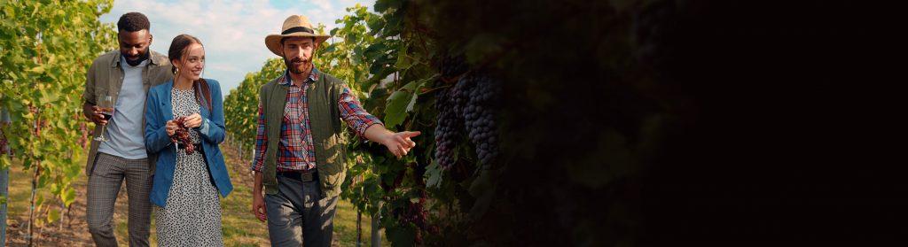 tour of vineyard at queenston mile vineyard